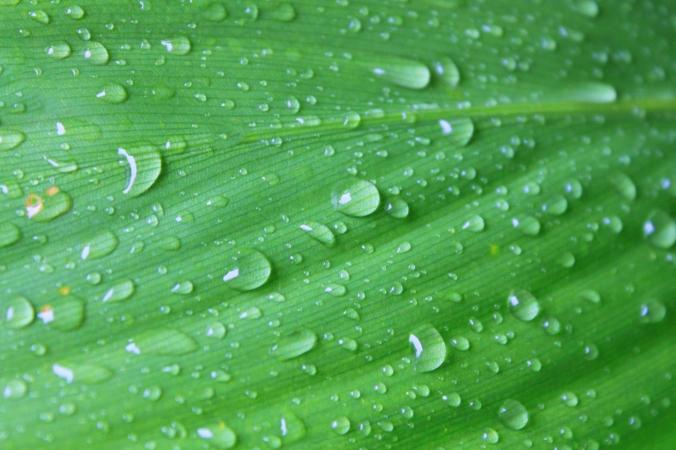 stockvault-large-leaf-after-rain127730